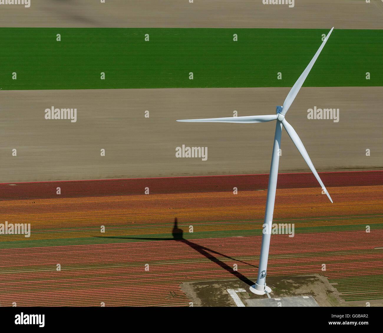 Vista aérea, turbinas eólicas, energía eólica, campos de tulipanes, agricultura, coloridos campos Imagen De Stock