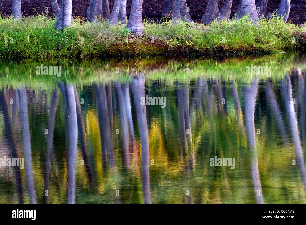 Palmeras reflejando en agua de Kaaiopio Lahuipua'a y estanques. La Isla de Hawaii Imagen De Stock