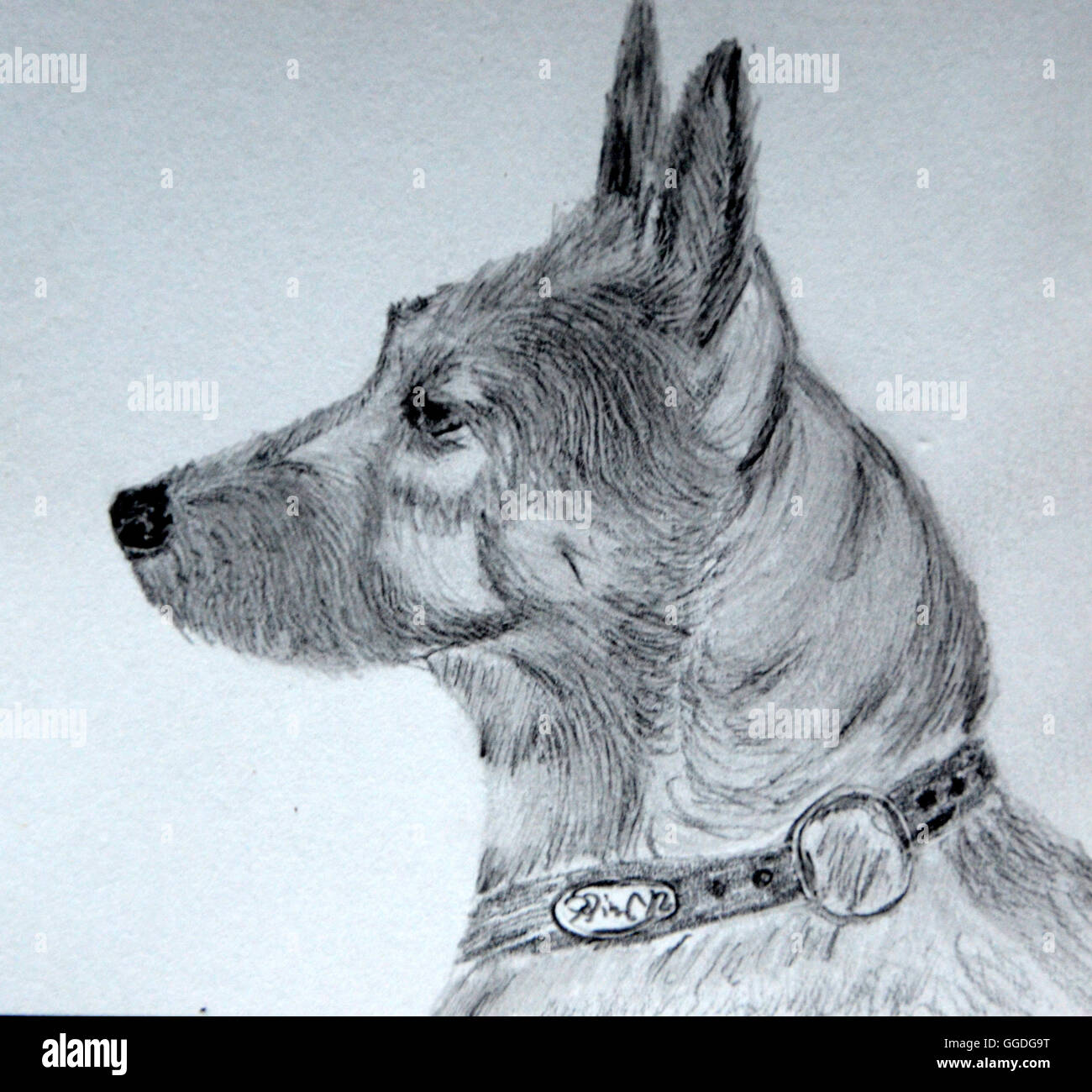 Dibujo A Lápiz Realizadas Por El Fotógrafo Una Mezcla De Perro De