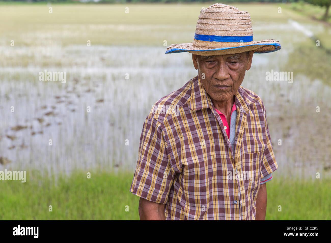 Anciano agricultor de arroz tailandés con sombrero y mirando hacia abajo con un arrozal en el fondo Imagen De Stock