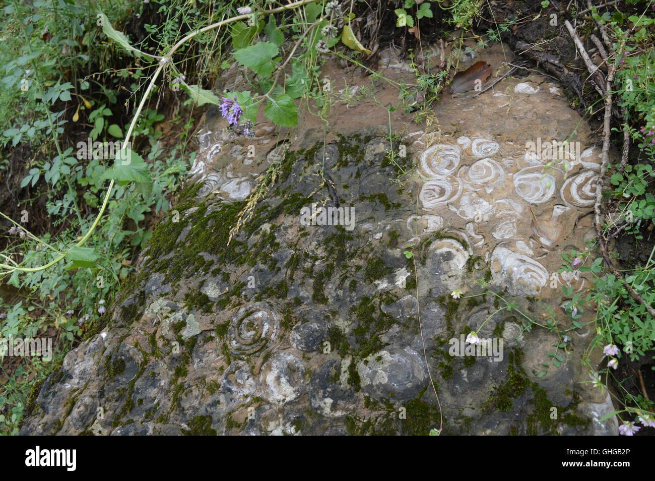 El Caracol Hill, Zona Paleontológica Imagen De Stock