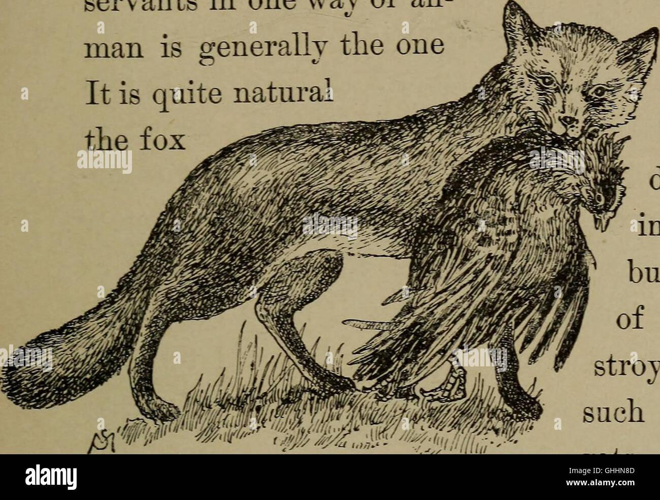 Conoce la vida en el campo y bosque; los animales, aves, ranas y salamandras (1898) Foto de stock