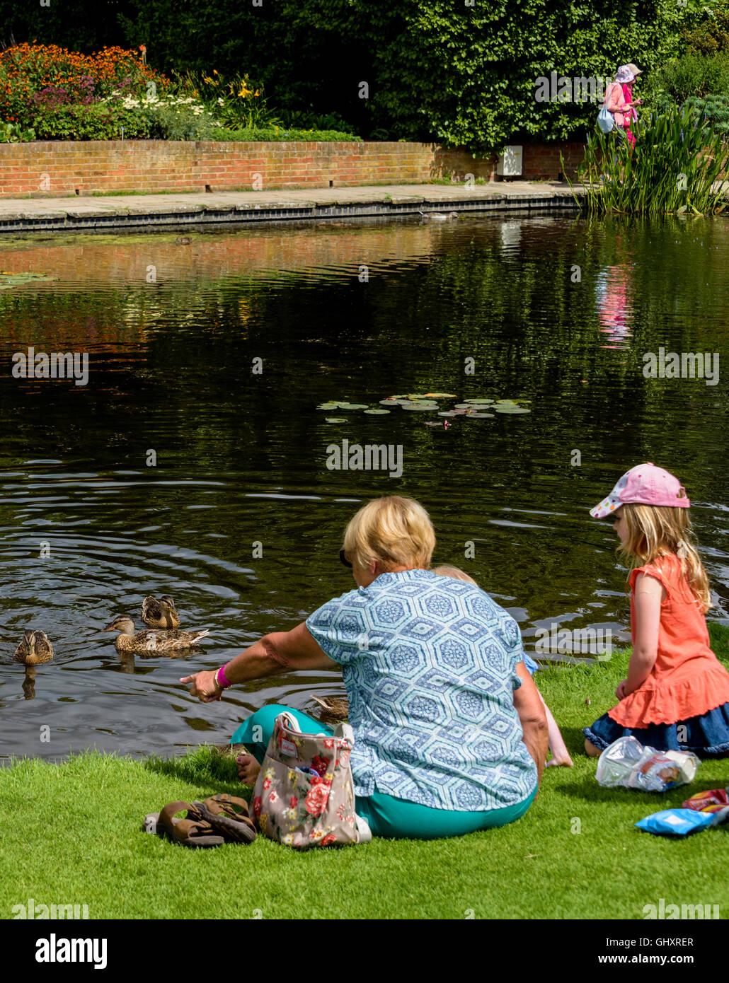 Alimentar a los patos en un estanque. Imagen De Stock