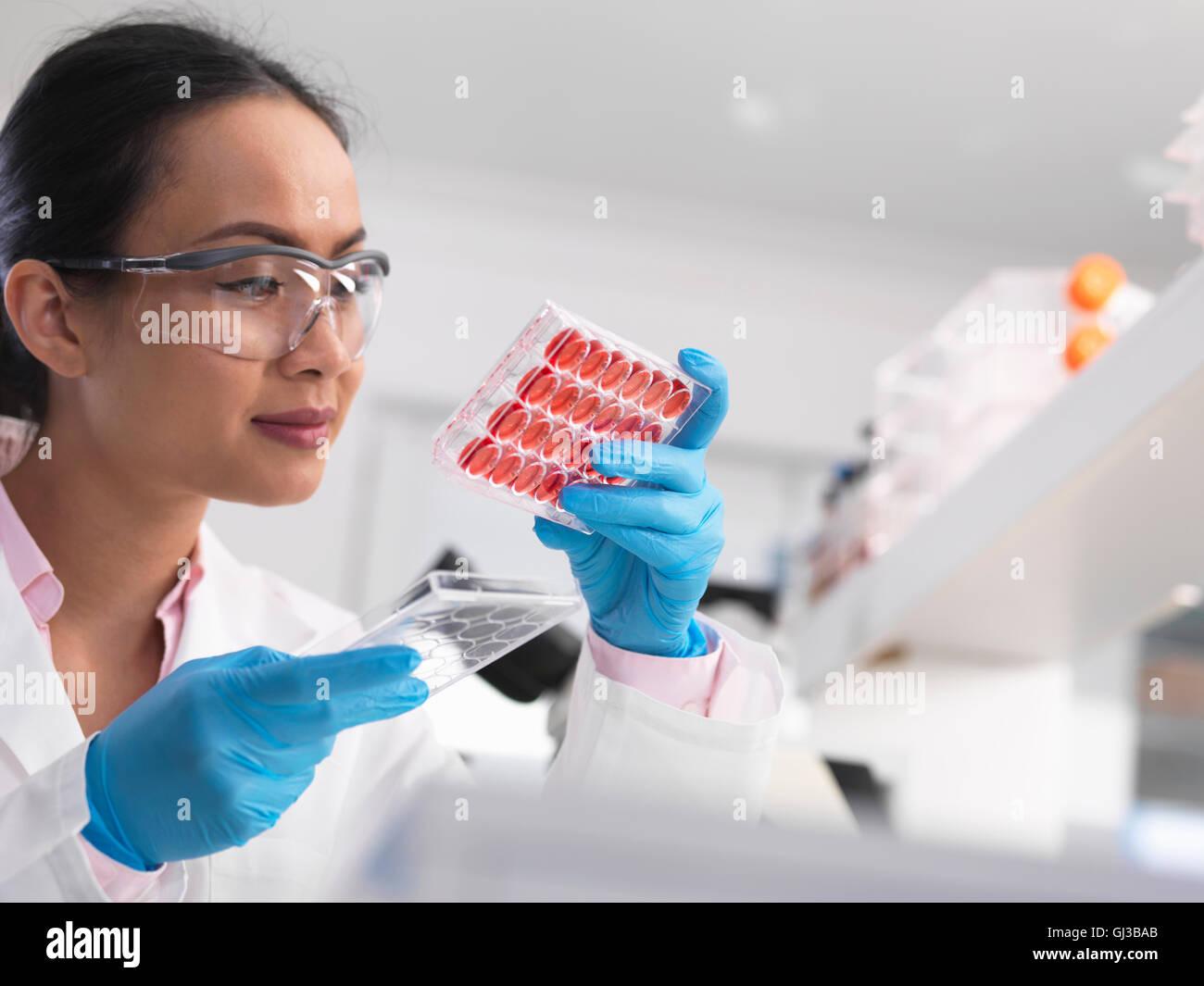 Investigadora examina los cultivos celulares en multi y la bandeja en el laboratorio. Imagen De Stock