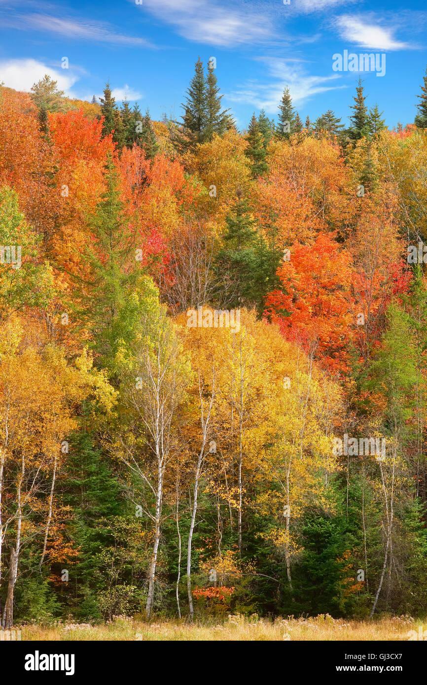 Bosque cerca de Woodstock, Vermont, EE.UU. Imagen De Stock