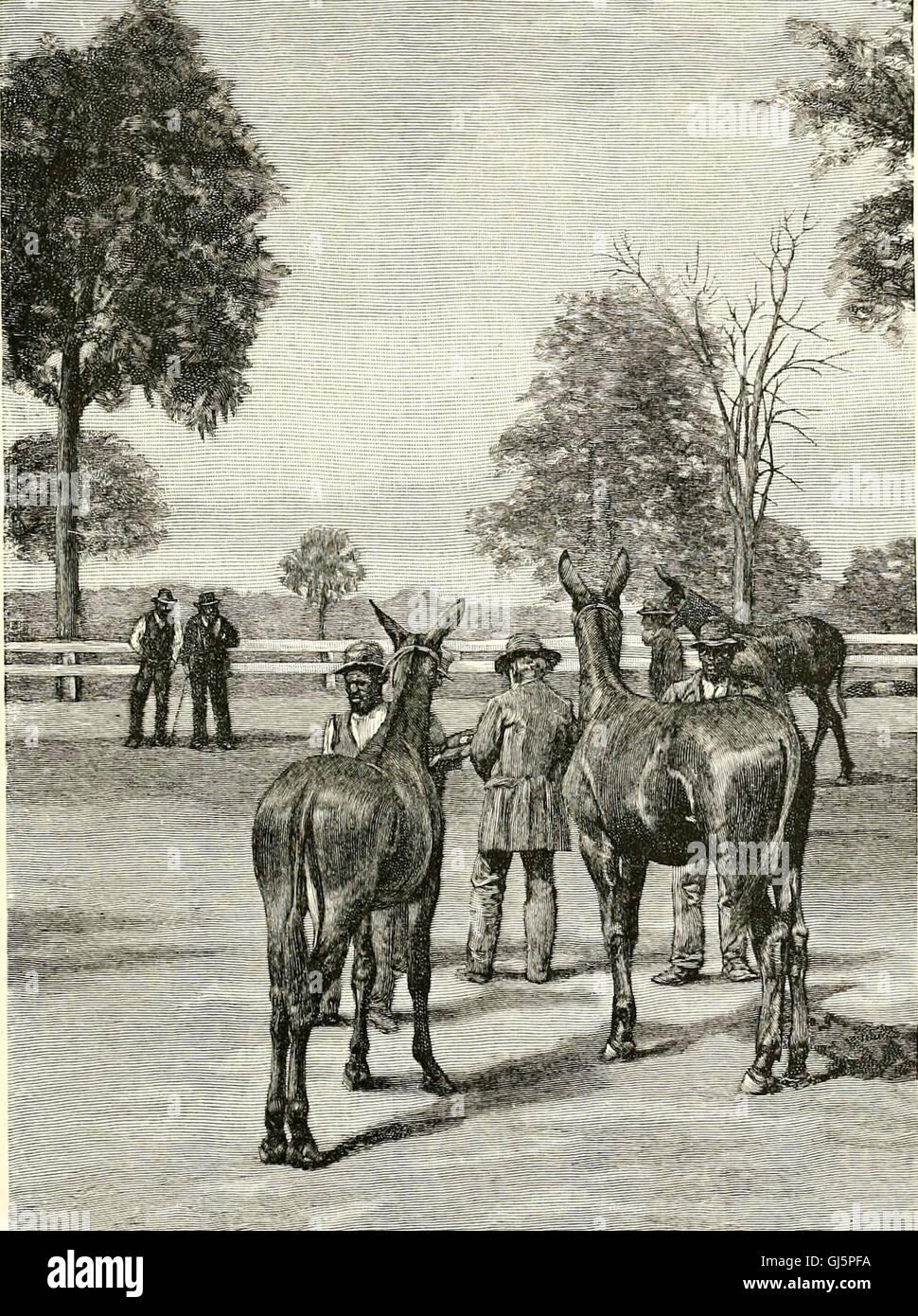 La región de pasto azul de Kentucky - y otros artículos de Kentucky (1892) Foto de stock
