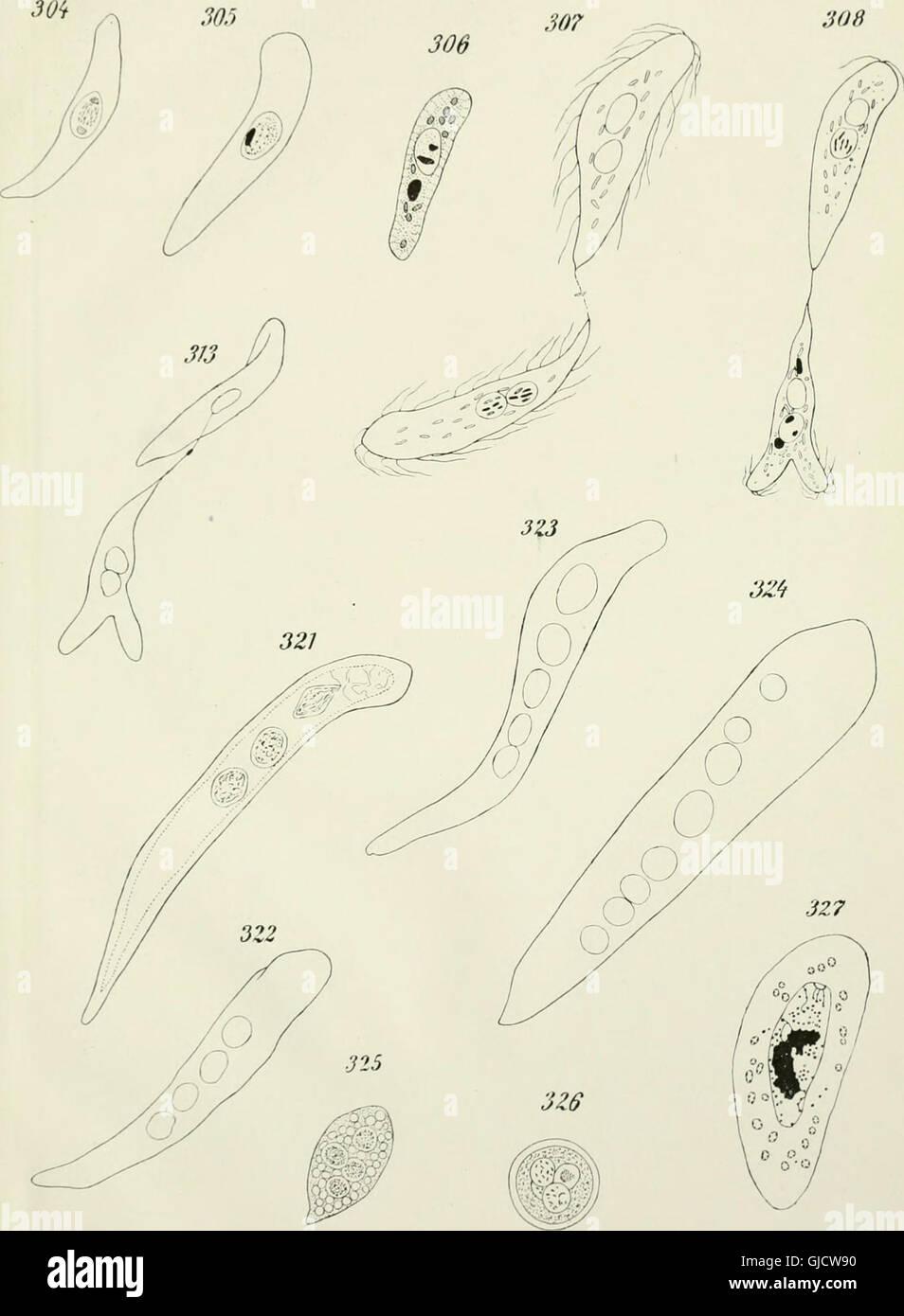 Opalina - su anatomía y reproducción, con una descripción de la ...