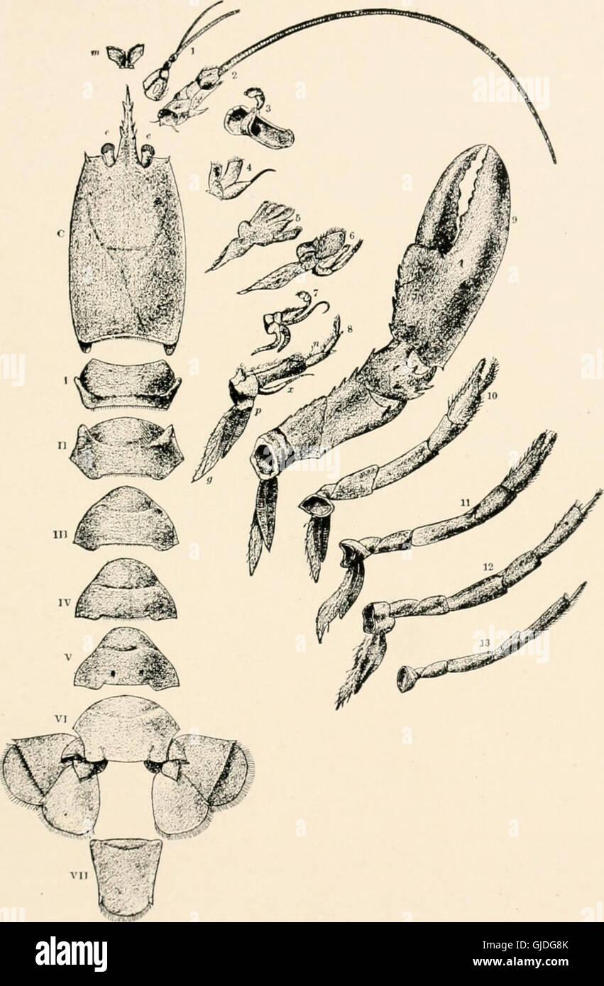 El mar en la playa de Marea ebb - guía para el estudio de las algas y la vida animal inferior encontrada entre tidemarks (1901) Foto de stock