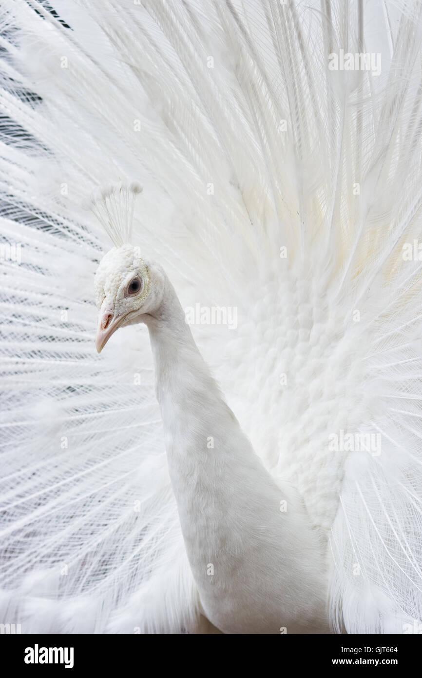 Animales animales aves Foto de stock
