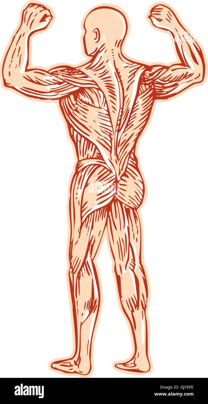 Encantador Anatomía De La Fe Friso - Anatomía de Las Imágenesdel ...