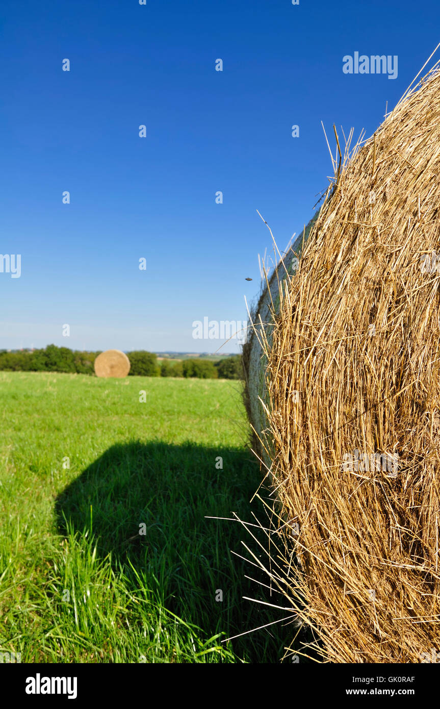 La agricultura La agricultura heno-aprietan Imagen De Stock