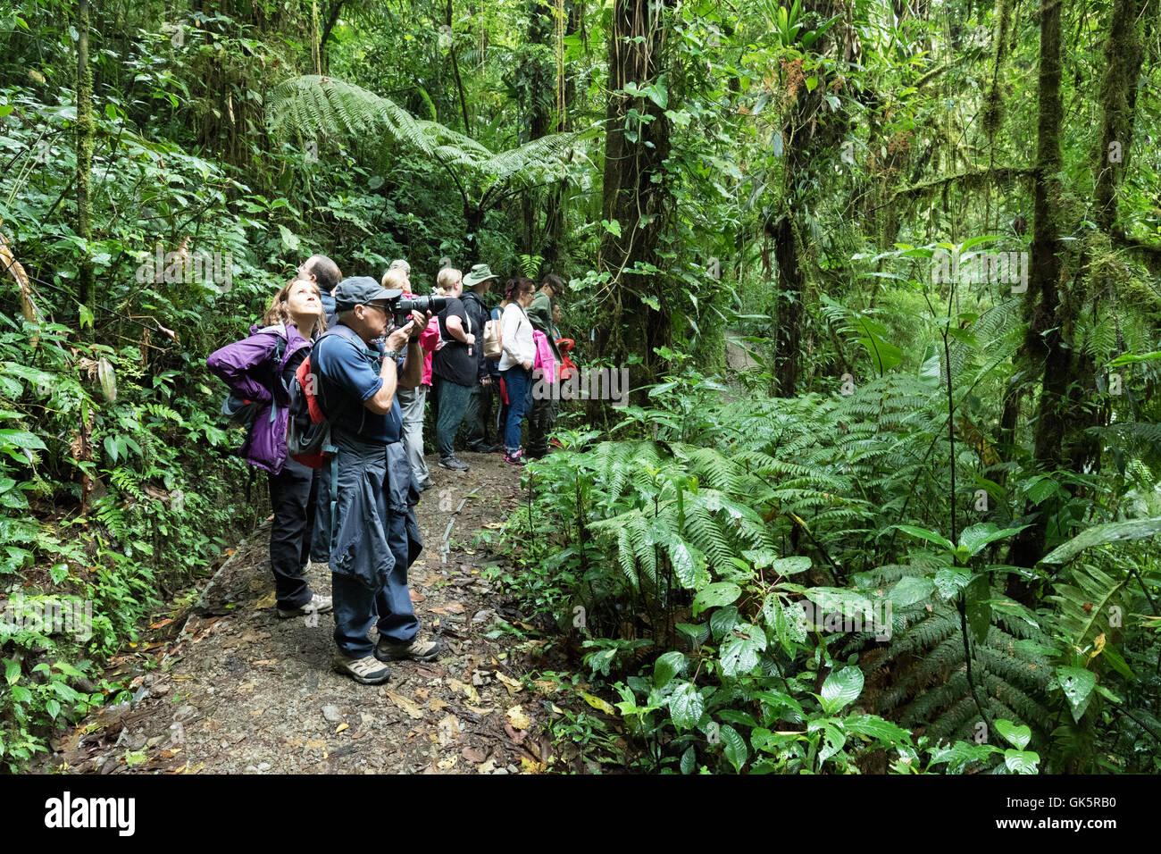 Grupo de tour, el bosque nuboso de Monteverde, Costa Rica Centroamérica Imagen De Stock