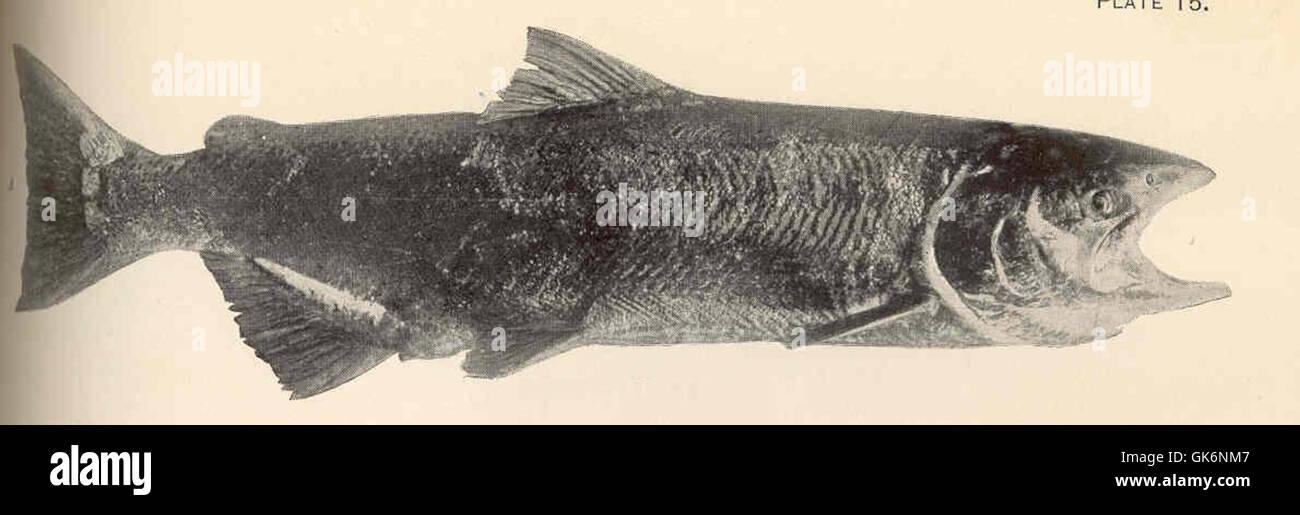 Salmon Ova Imágenes De Stock & Salmon Ova Fotos De Stock - Alamy