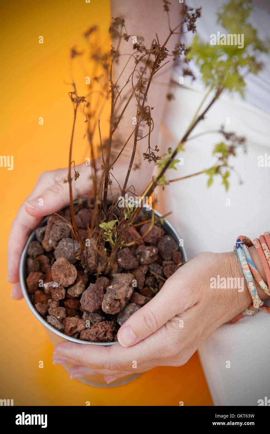 Planta en manos mindfulness Imagen De Stock