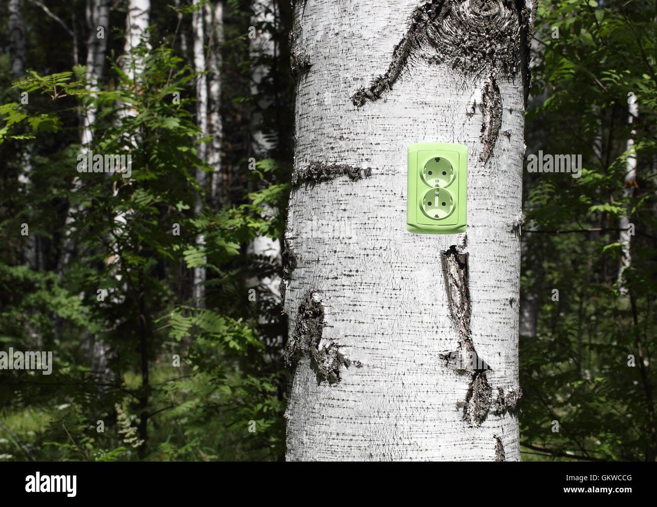 Receptáculo de alimentación en un árbol Imagen De Stock