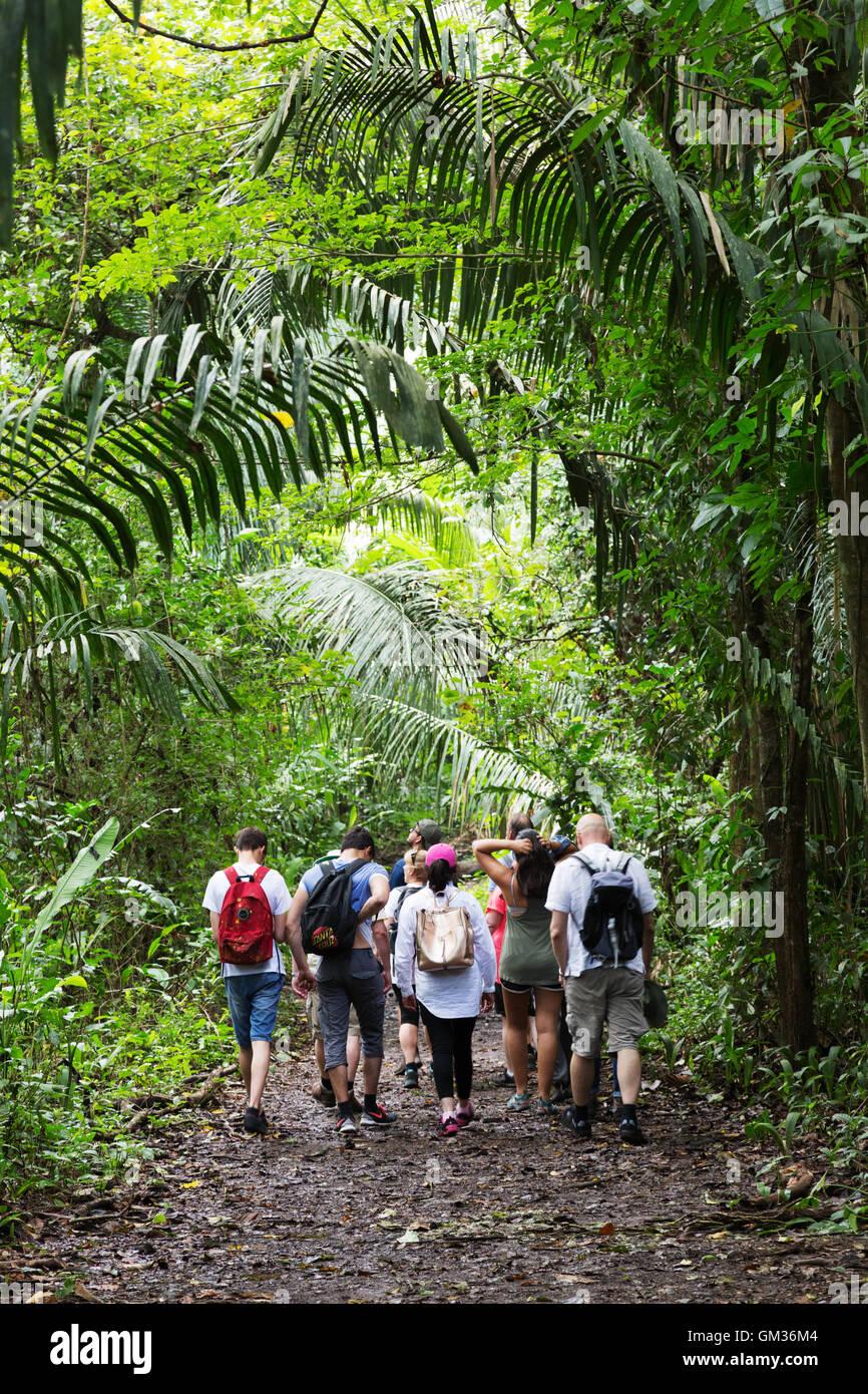 Los visitantes a caminar en la selva en un tour guiado, Monteverde, Costa Rica, Centroamérica Imagen De Stock