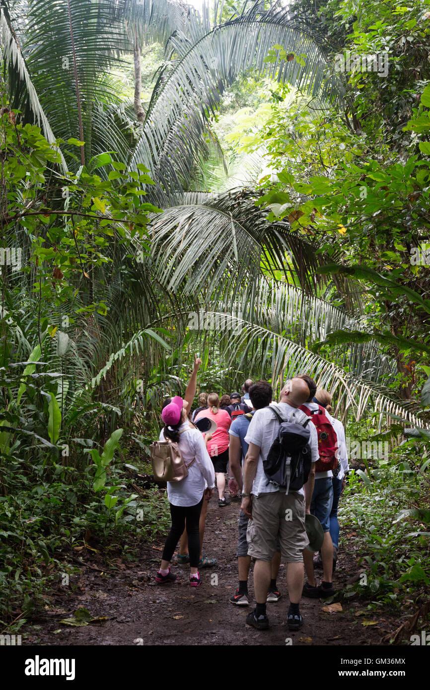 Los turistas que caminan en el bosque lluvioso, el Parque Parque nacional Carara, Costa Rica, Centroamérica Imagen De Stock