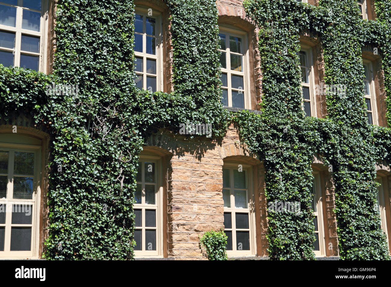 Las paredes cubiertas de hiedra de Nassau Hall, de la Universidad de Princeton, Princeton, Nueva Jersey, EE.UU. Imagen De Stock