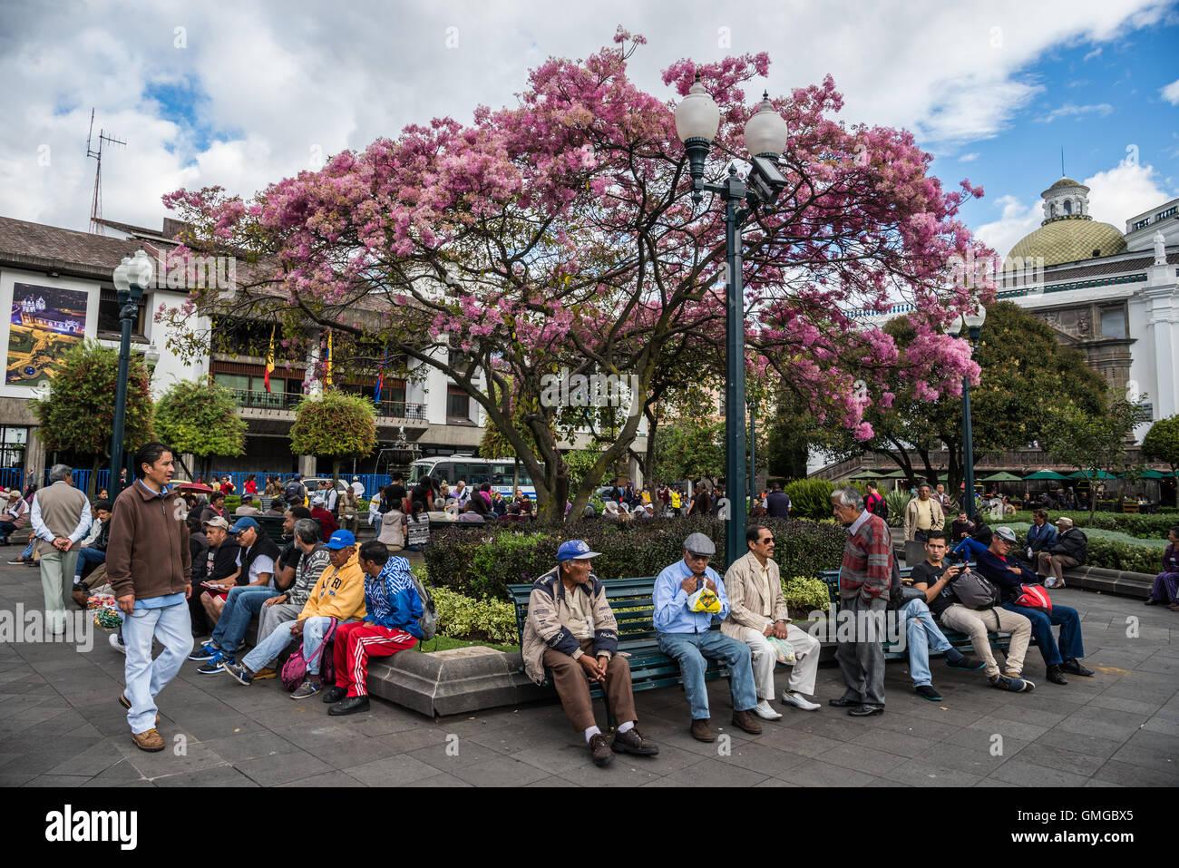 Personas de todas las edades reunidos en la Plaza de la independencia en el casco antiguo de la ciudad de Quito, Imagen De Stock