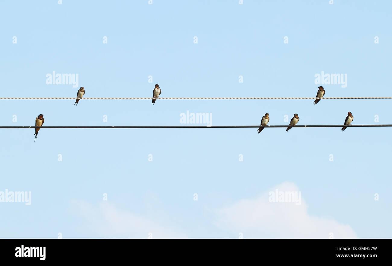 Sparrow sentado sobre el cable de alimentación Foto de stock