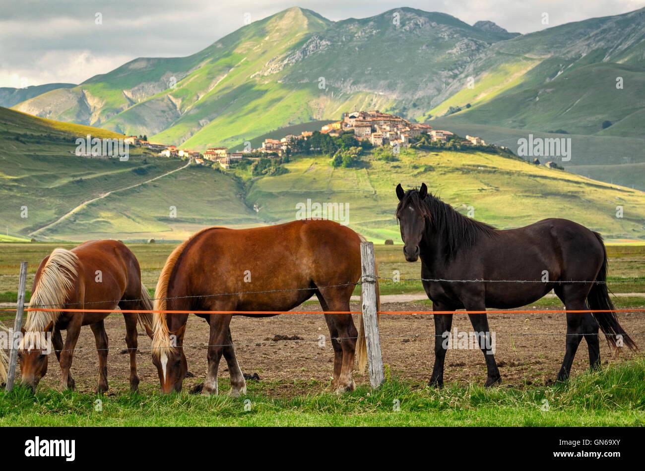 Castelluccio di Norcia (Umbría) Foto de stock