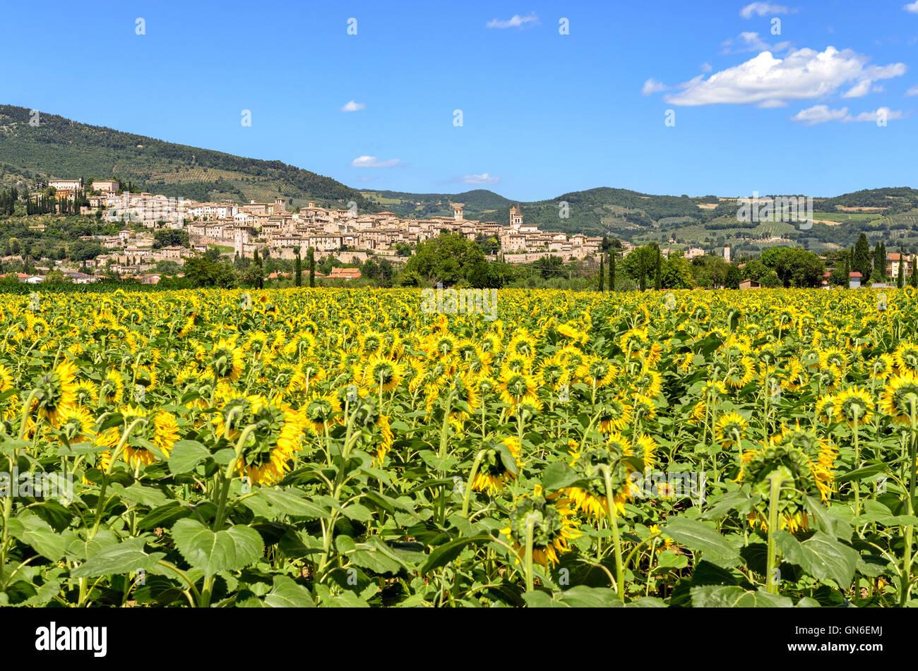 Spello (Umbria Italia) Foto de stock