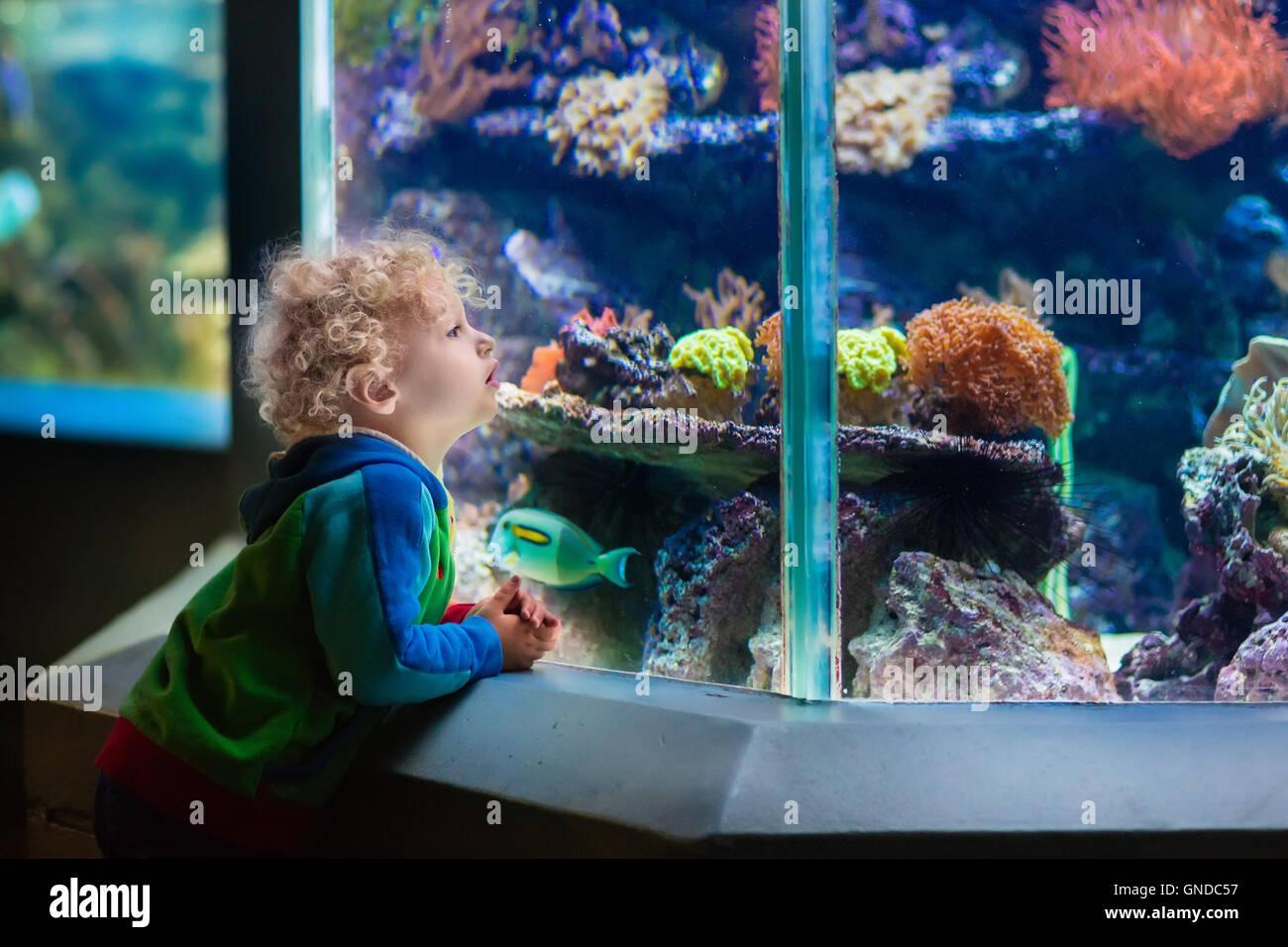 Chico viendo peces de coral tropical en gran depósito de vida marina. Los chicos en el Zoo Aquarium. Imagen De Stock