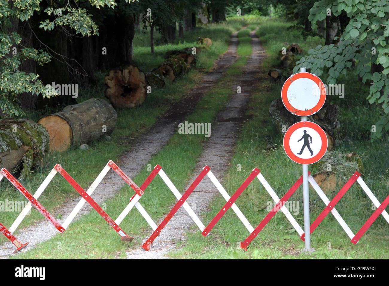 El bloqueo de un camino entre los árboles Imagen De Stock