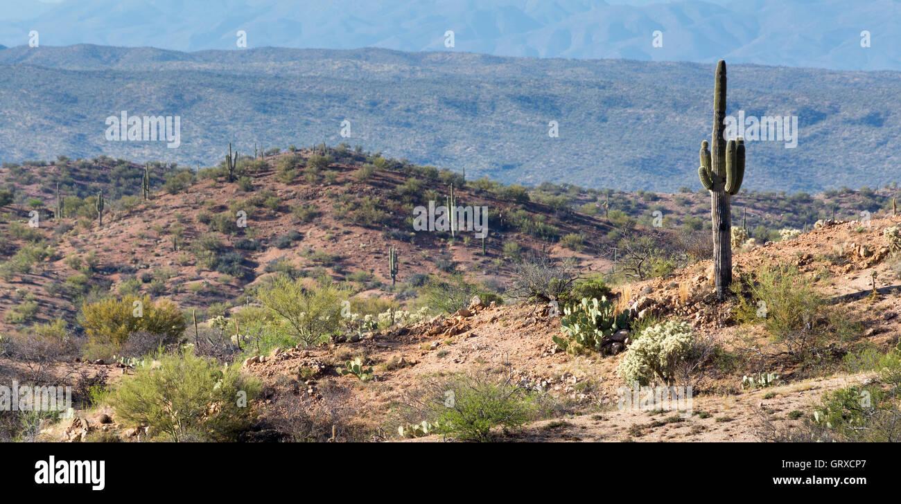 Un cacto saguaro vistas del desierto Sonorense y las Black Hills de Arizona. Imagen De Stock
