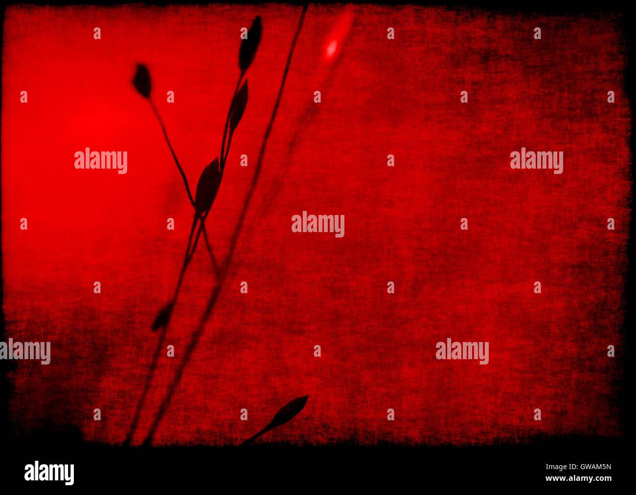 080de2720 Ecológico vintage grunge con textura de tela rojo imagen: planta de cerca  con el fondo