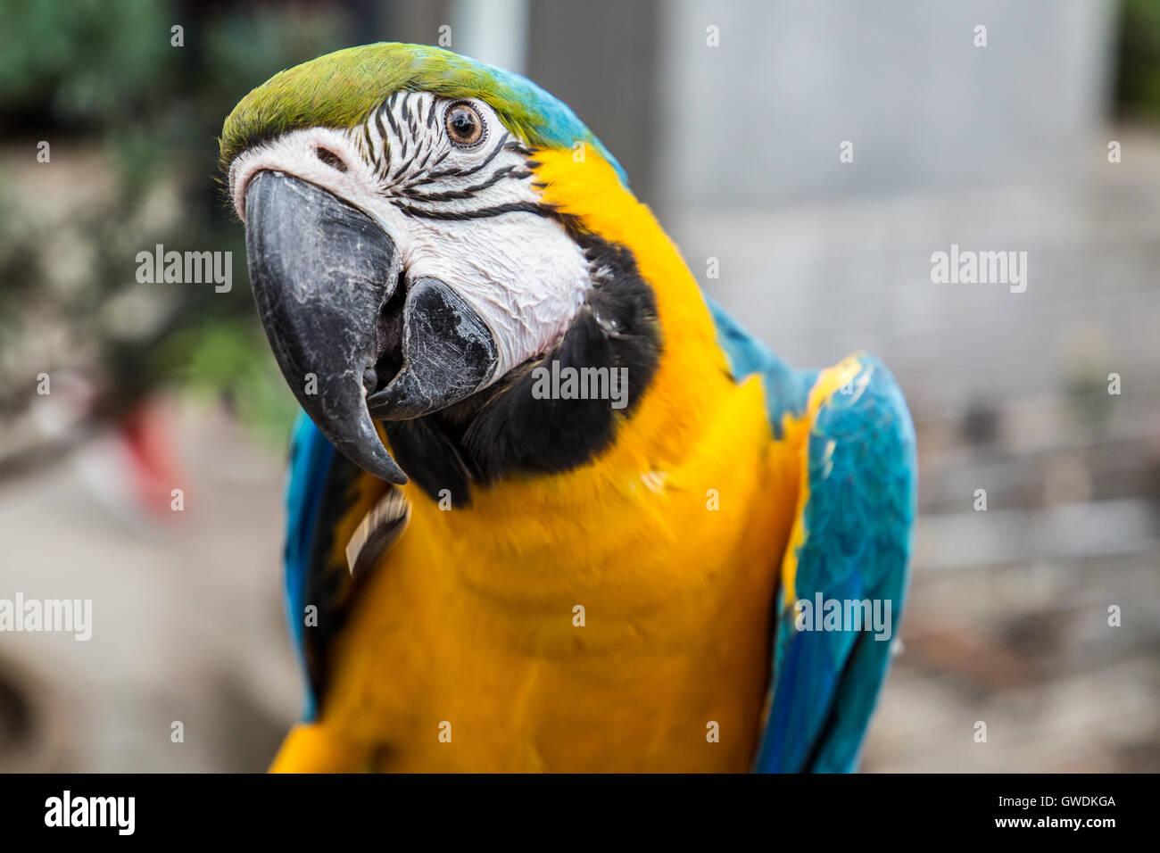 Parrot en el mercado de pájaros de Yuen Po, Mong Kok, Kowloon, Hong Kong Imagen De Stock