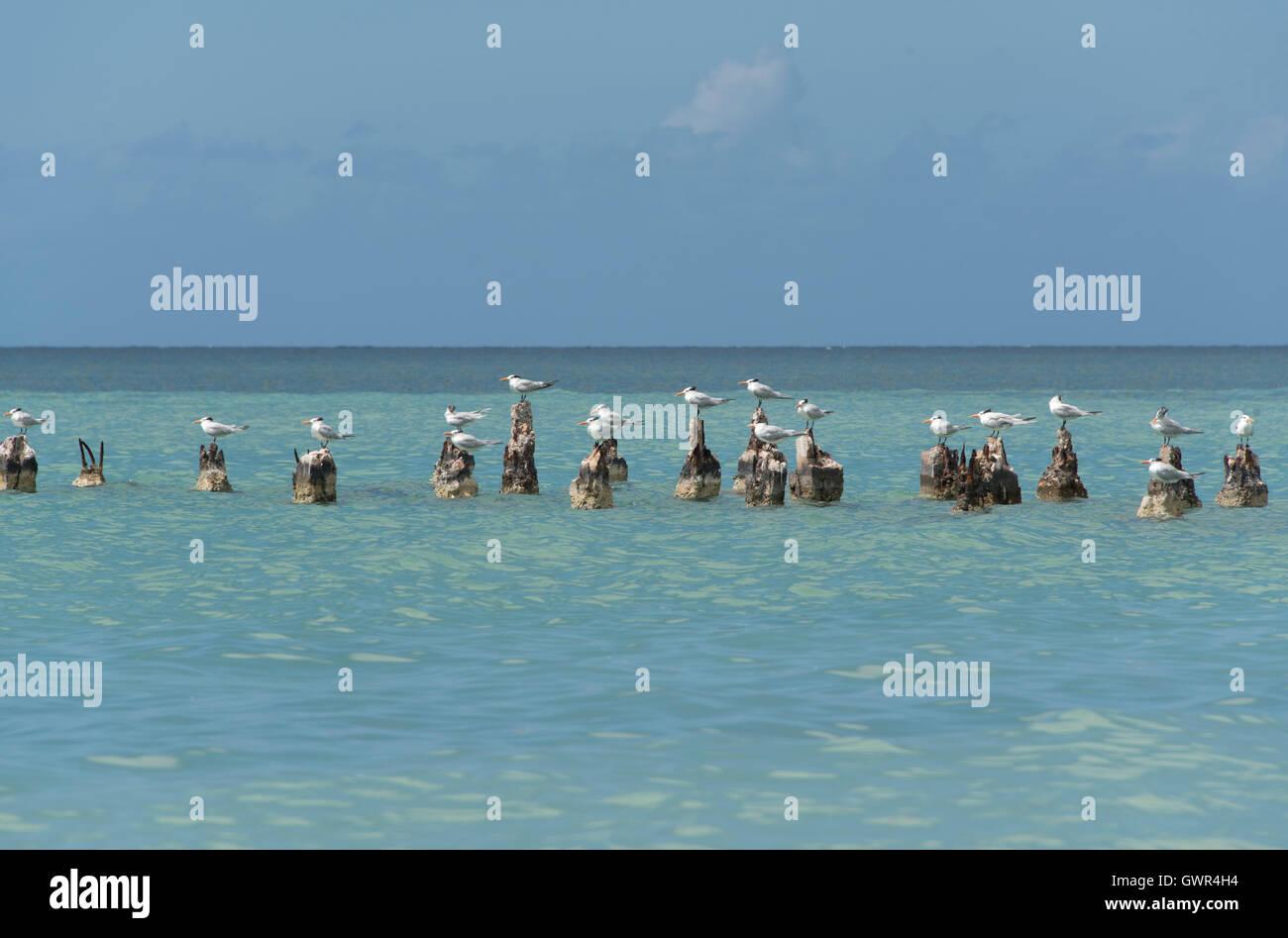 El suroeste de Puerto Rico Imagen De Stock