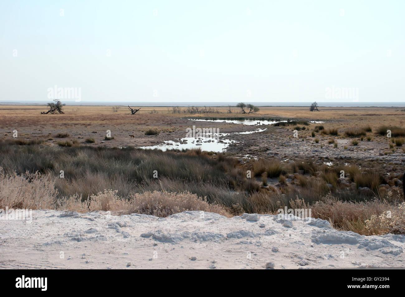 El Parque Nacional de Etosha, Namibia, agosto de 2016 Imagen De Stock