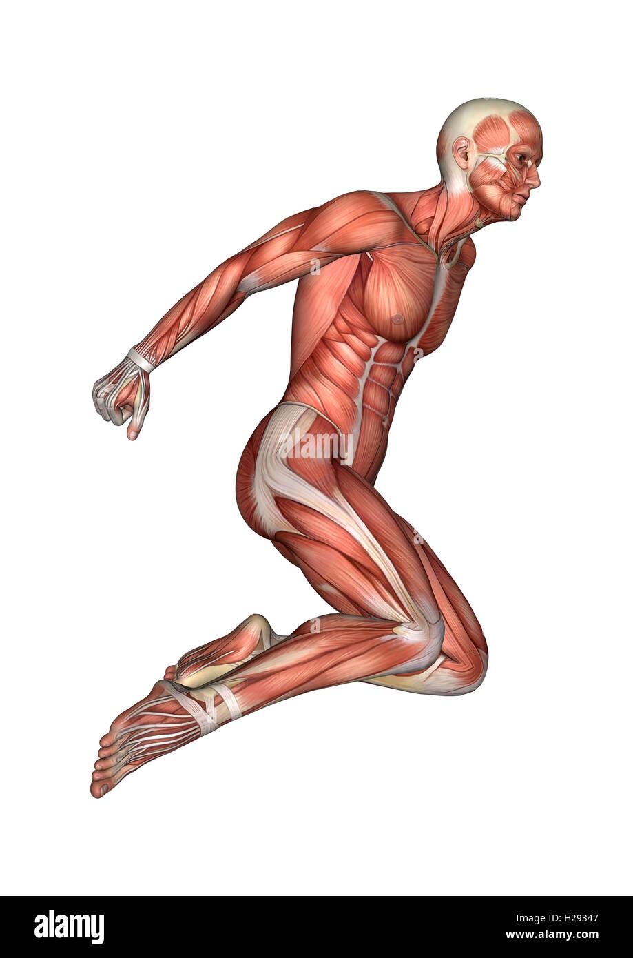 Perfecto Anatomía Masculina En Corona Imágenes - Imágenes de ...
