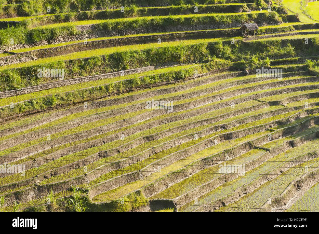 Indonesia, Bali Tirta Ganga, las terrazas de arroz de Bali Imagen De Stock