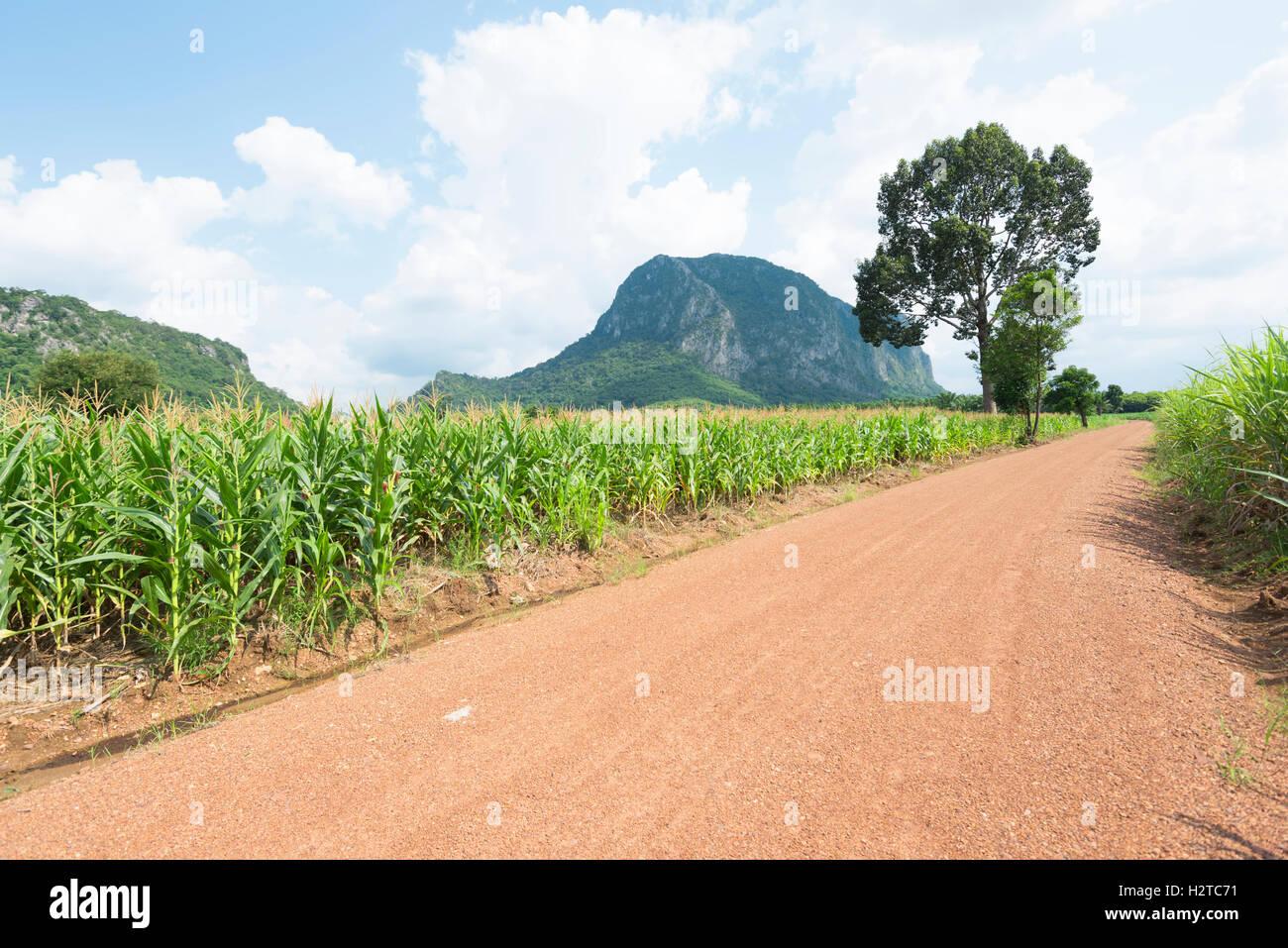 País por carretera a través de los campos de maíz Imagen De Stock