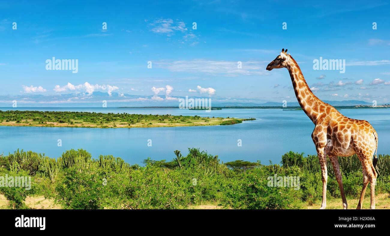 Paisaje africano con el río Nilo y jirafas Imagen De Stock