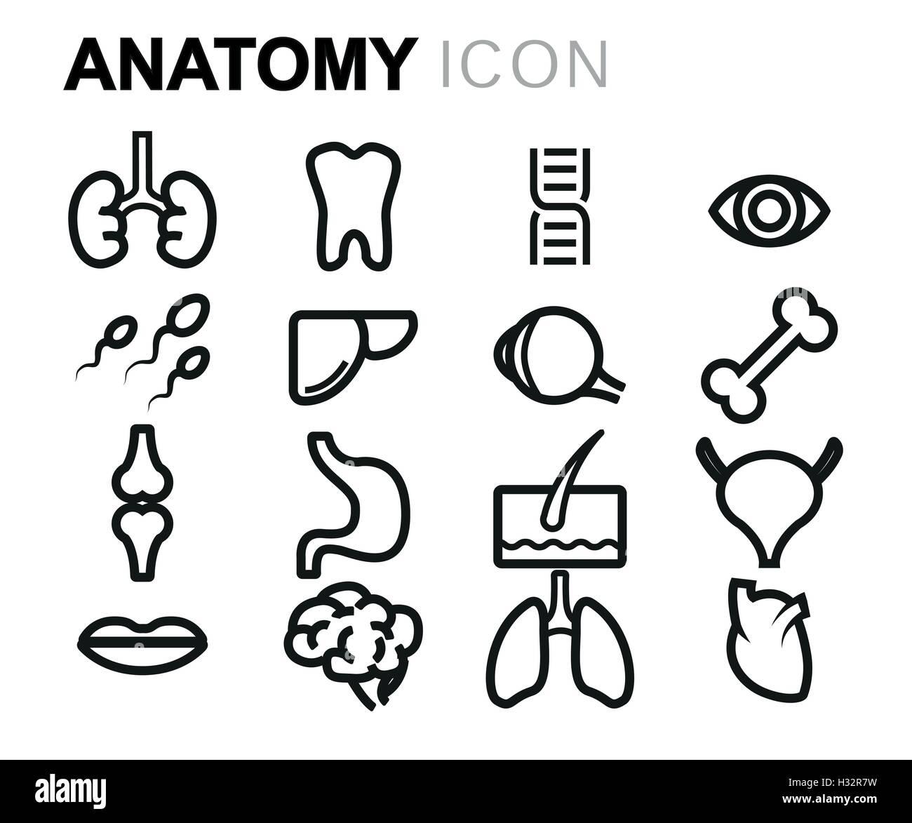 Vector anatomía línea negra sobre fondo blanco conjunto de iconos ...