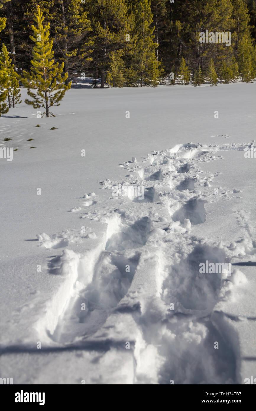 Raquetas de nieve profunda pistas en profundos, blancos como la ...