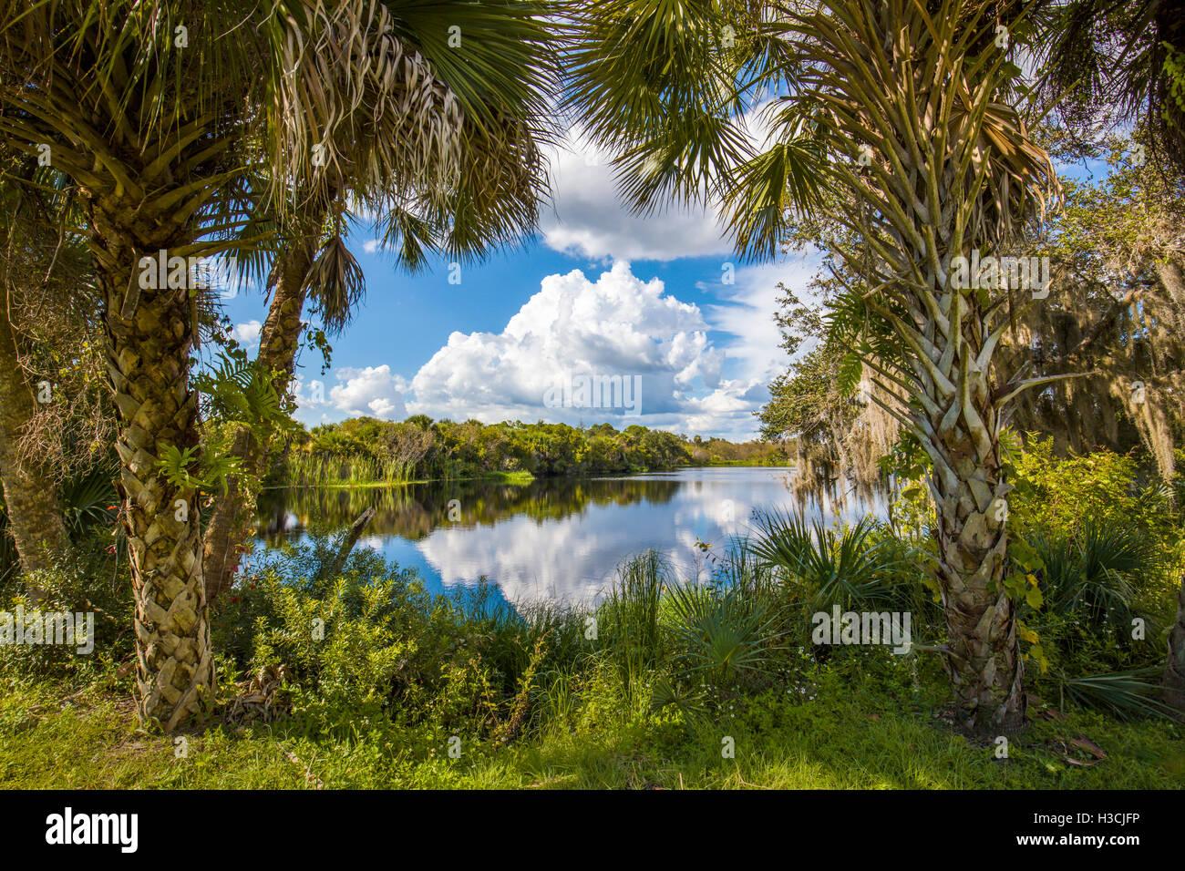 Deer Creek Preserve la pradera Florida en Venecia. Foto de stock