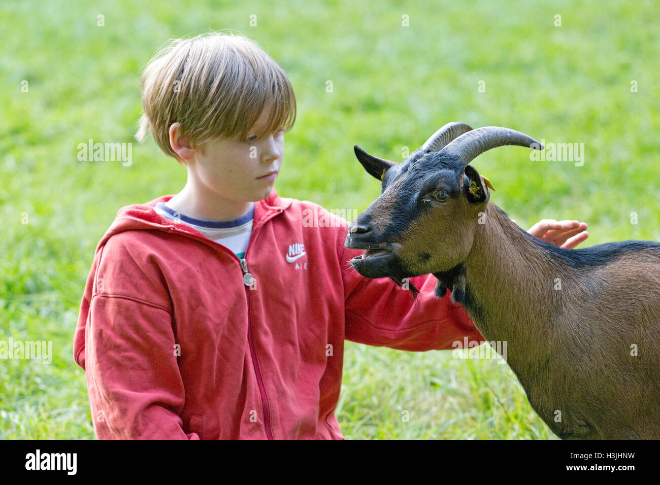 Boy acariciar cabras, Wildpark Schwarze Berge, Baja Sajonia, Alemania Imagen De Stock