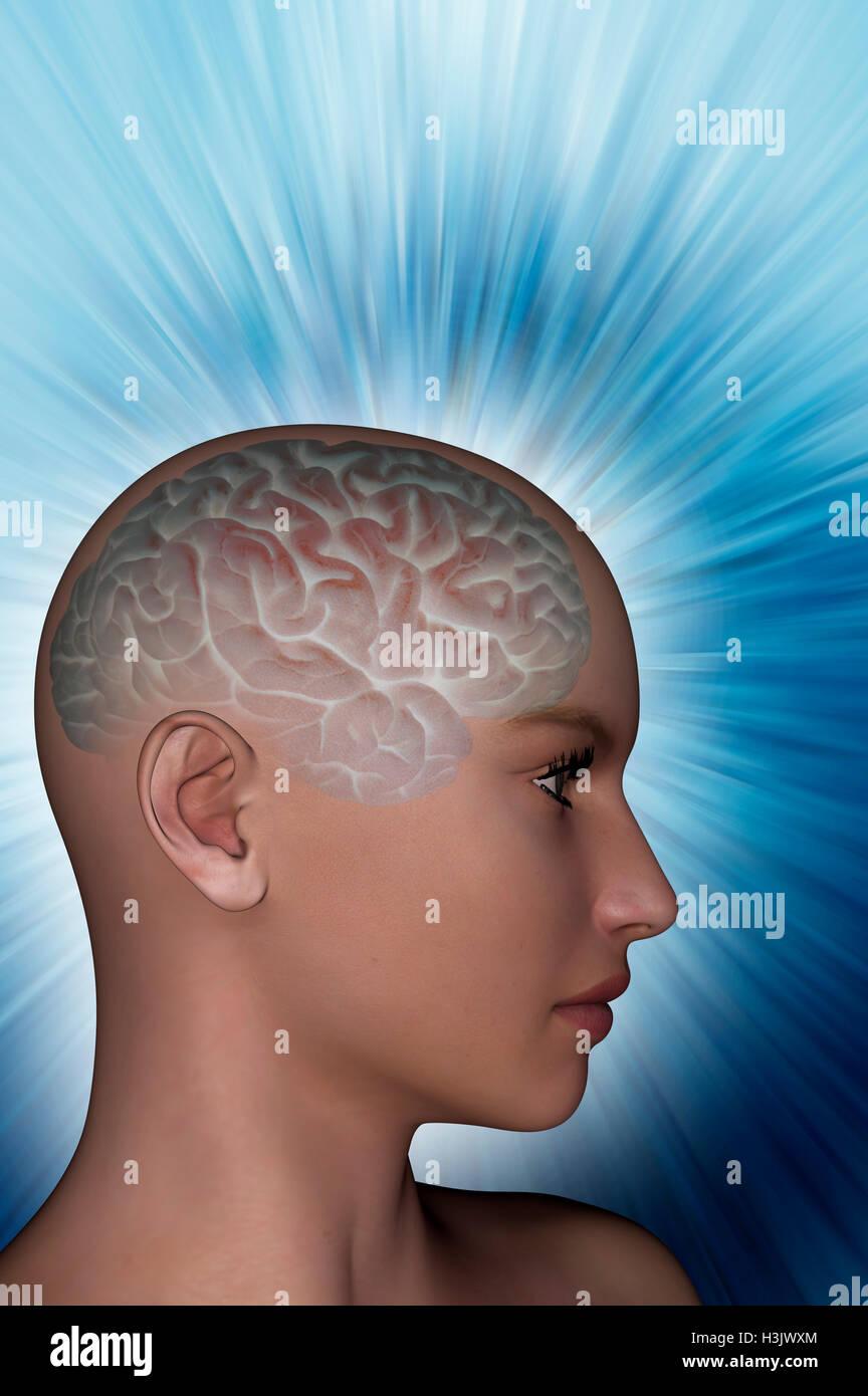 Cerebro Humano mostrando en un modelo femenino presentada en 3D. Foto de stock