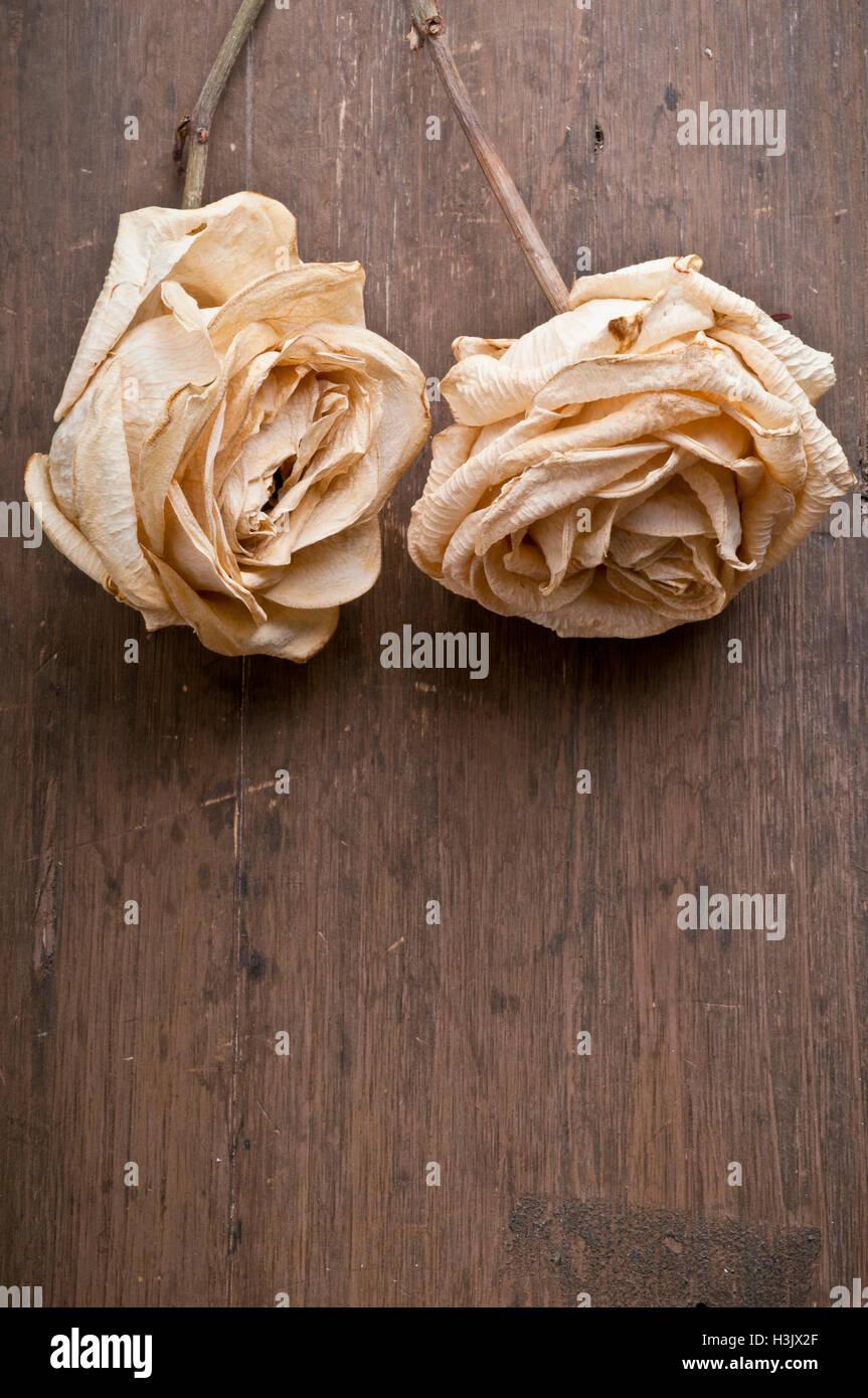 dos rosas secas Foto de stock