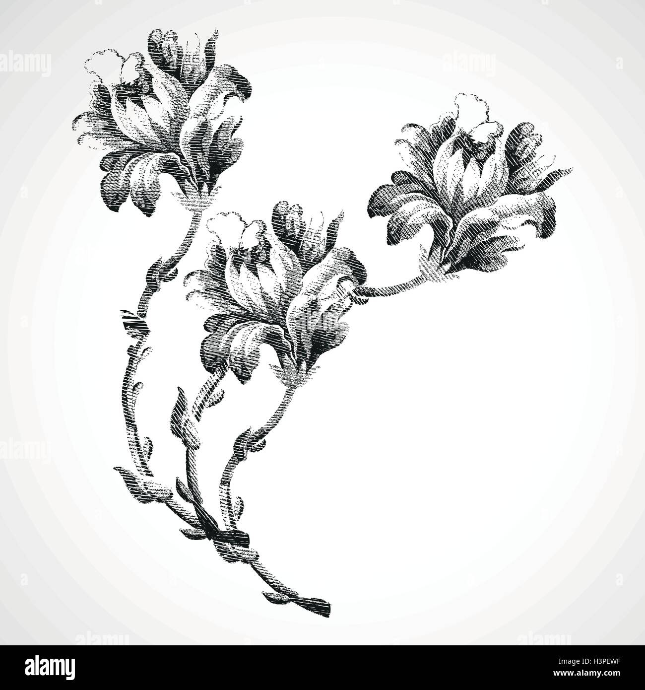 Dibujadas A Mano Bouquet De Tres Flores De Lirio Vintage