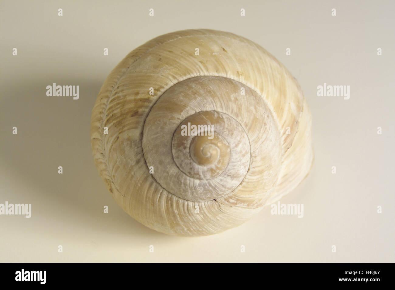 Snail Icon Imágenes De Stock & Snail Icon Fotos De Stock - Alamy