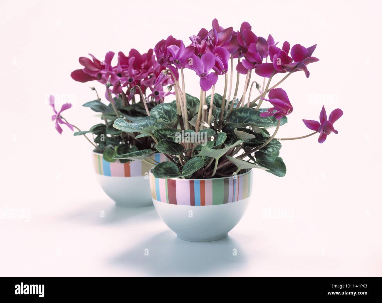 Cyclamens Macetas Plantas Macetas Con Plantas Plantas De Interior - Plantas-interior-con-flor