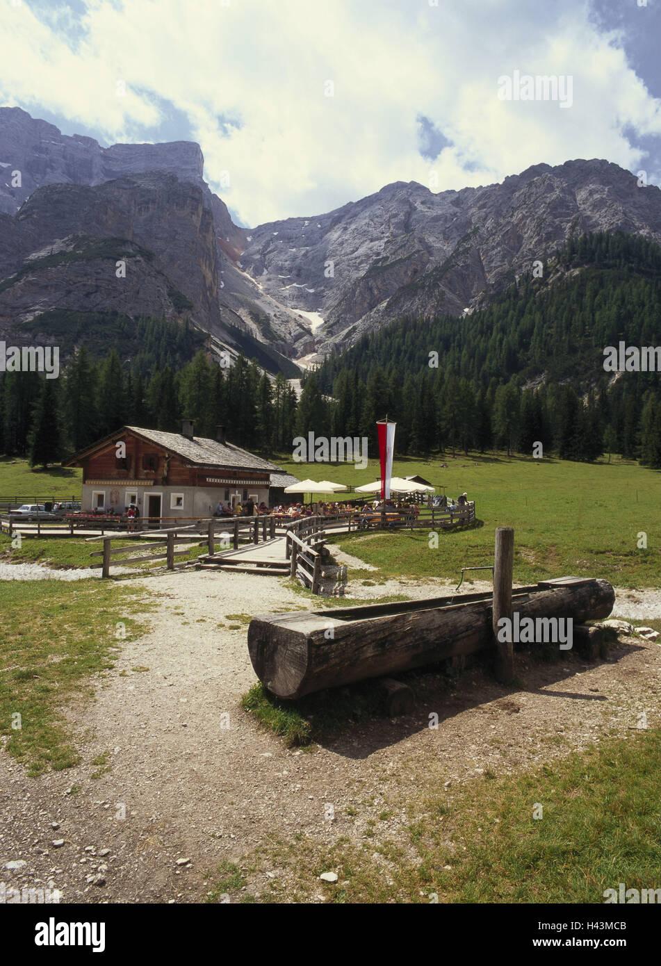 Italia El Tirol Del Sur Dolomitas Madera Verde Alp