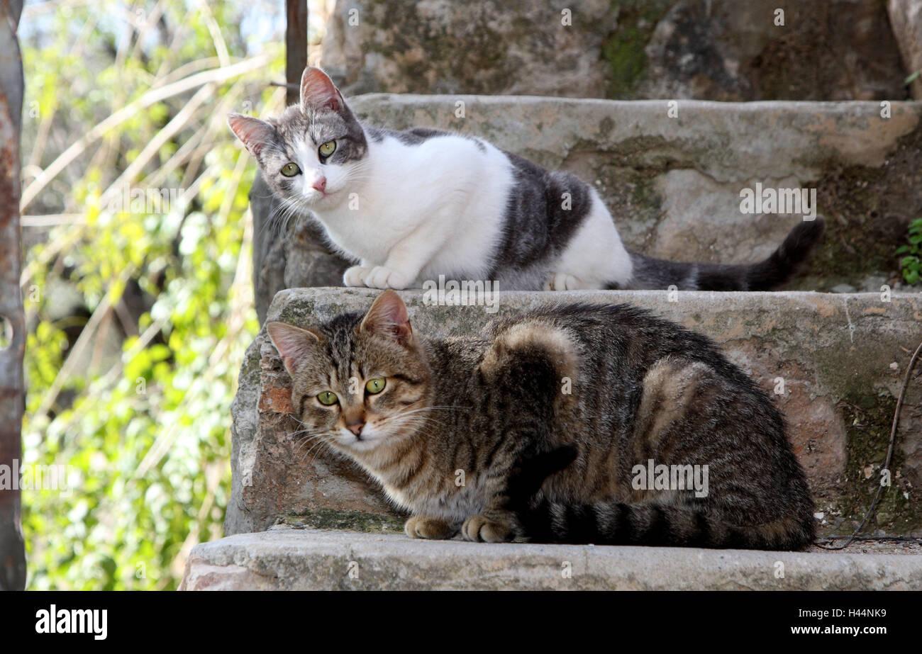 Los gatos, Crouch, escaleras, animales, mamíferos, mascotas, gatos pequeños, Felidae, domesticar, los Imagen De Stock