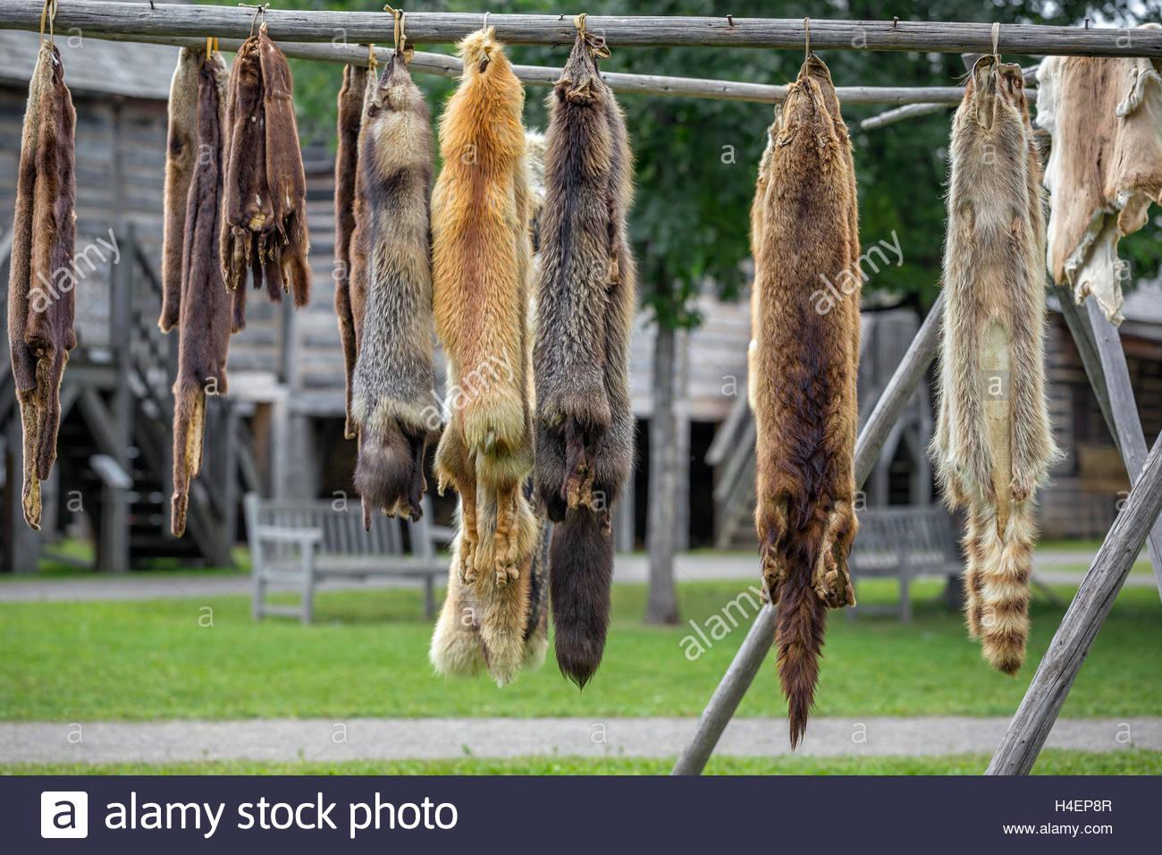 Pieles, pieles colgando, Ontario, Canadá. Imagen De Stock