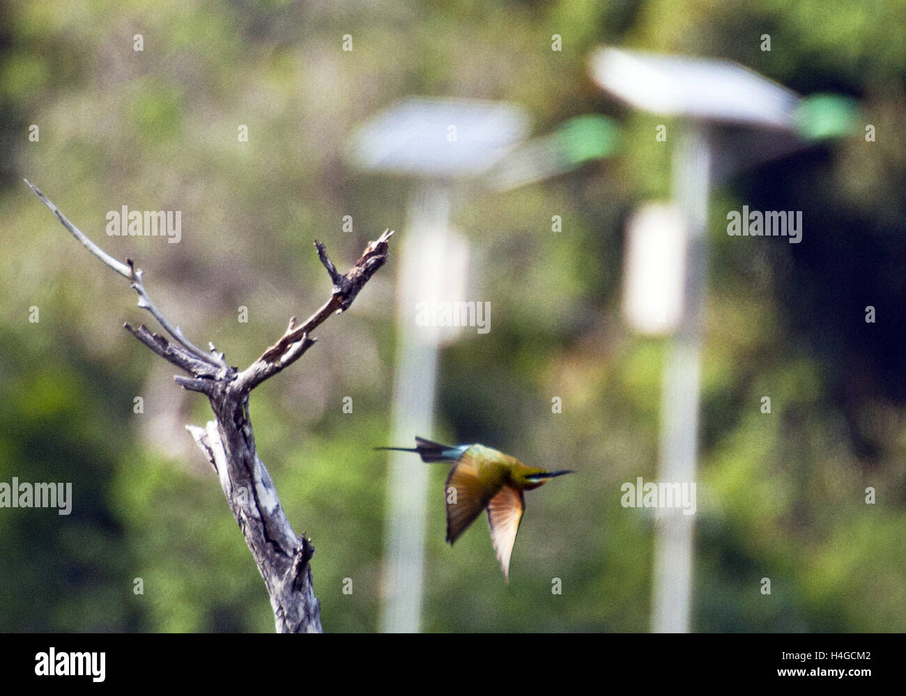 Yellow Throat Patch Imágenes De Stock & Yellow Throat Patch Fotos De ...